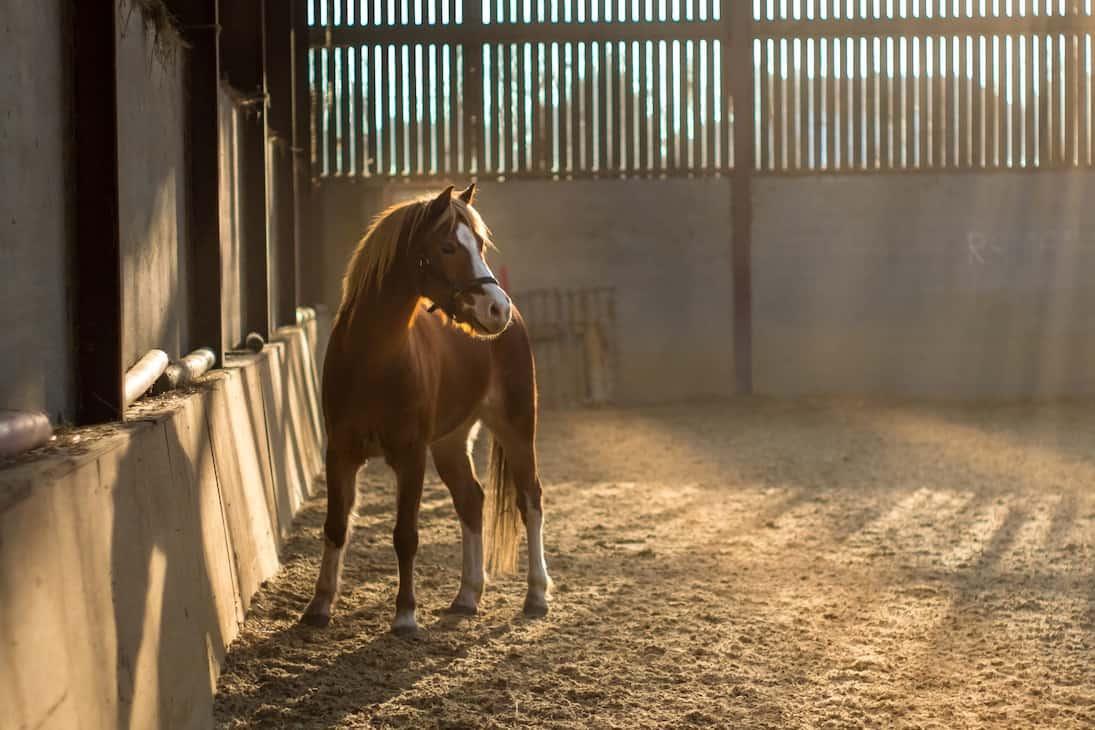 LaVitrine_3877_Centre_Equestre_1